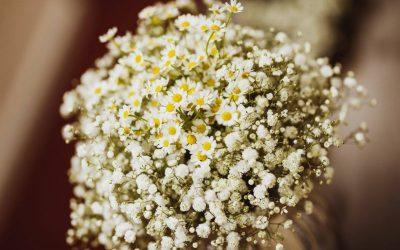 Bridal Flowers – Daisies